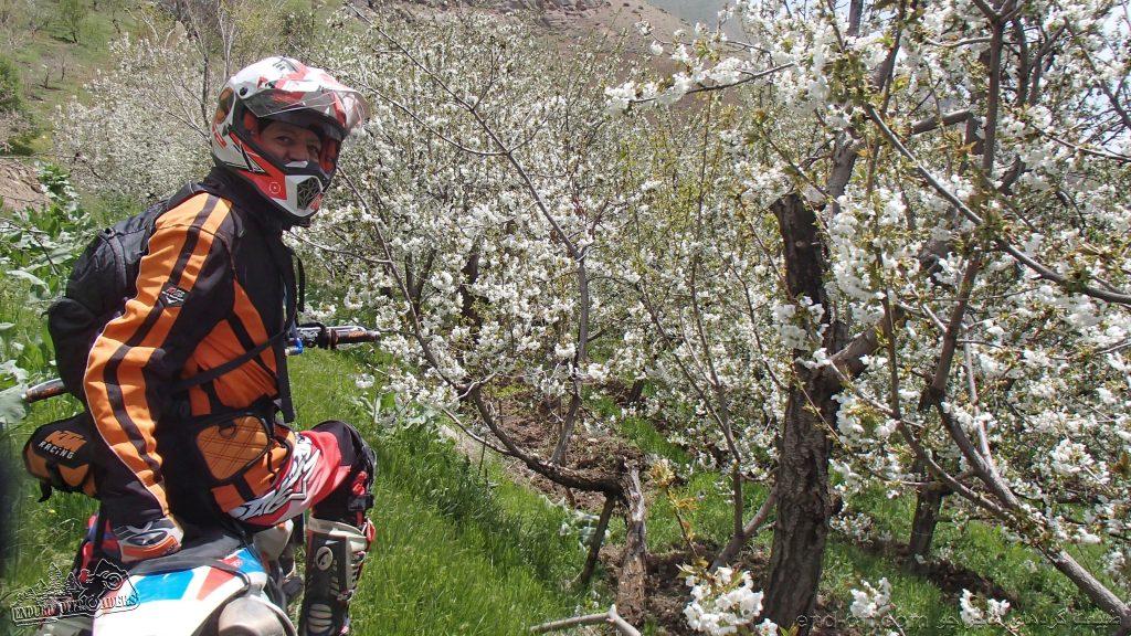 بهار زیبا در ارتفاعات منطقه وردیج، شمال غربی تهران – فروردین ۱۳۹۹