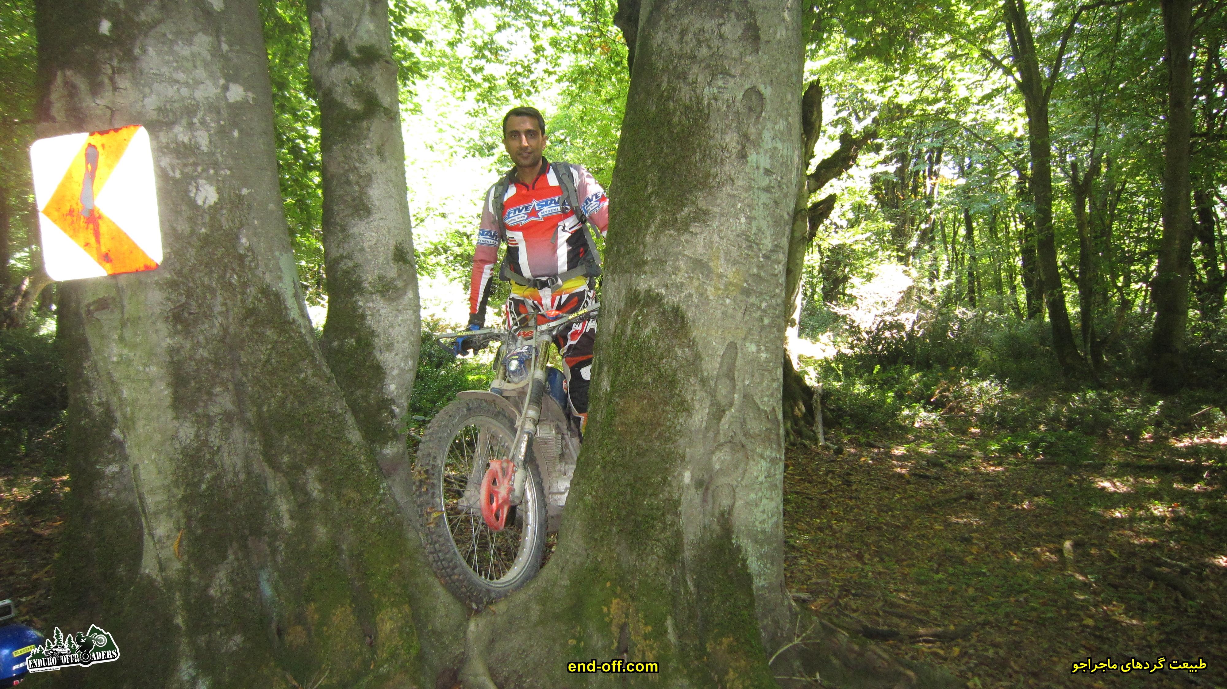 جنگل الیمستان - تابستان 1399 - 2020